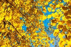 Το φθινόπωρο τα φύλλα Στοκ Εικόνες