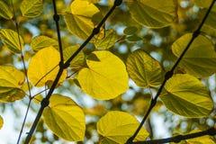Το φθινόπωρο τα φύλλα Στοκ φωτογραφία με δικαίωμα ελεύθερης χρήσης