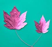 Το φθινόπωρο φθάνει όλη η τέχνη φιλτράρισε το σύνολο τοίχων εικόνων φωτογραφιών στοών ακριβώς Μόδα 9 autumn colors Στοκ Εικόνες