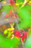 Το φθινόπωρο φυλλώματος πτώσης αφήνει κοντά επάνω το υπόβαθρο στοκ φωτογραφία με δικαίωμα ελεύθερης χρήσης