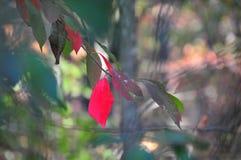 Το φθινόπωρο φυλλώματος πτώσης αφήνει κοντά επάνω το υπόβαθρο στοκ εικόνες