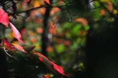 Το φθινόπωρο φυλλώματος πτώσης αφήνει κοντά επάνω το υπόβαθρο στοκ εικόνα με δικαίωμα ελεύθερης χρήσης