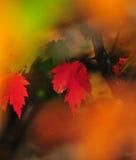 Το φθινόπωρο φυλλώματος πτώσης αφήνει κοντά επάνω το υπόβαθρο στοκ εικόνα