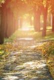 Το φθινόπωρο χρυσό η αλέα στα πόλης μειωμένα φύλλα Στοκ εικόνες με δικαίωμα ελεύθερης χρήσης
