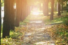 Το φθινόπωρο χρυσό η αλέα στα πόλης μειωμένα φύλλα Στοκ φωτογραφία με δικαίωμα ελεύθερης χρήσης