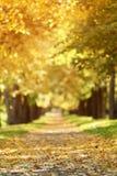 Το φθινόπωρο χρυσό η αλέα στην πόλη με τα πεσμένα φύλλα Στοκ Φωτογραφία