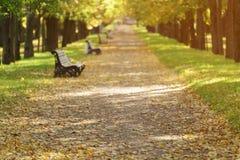 Το φθινόπωρο χρυσό η αλέα στην πόλη με τα πεσμένους φύλλα και τους πάγκους Στοκ φωτογραφίες με δικαίωμα ελεύθερης χρήσης