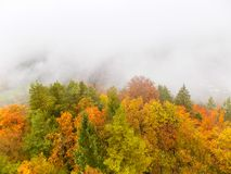 Το φθινόπωρο χρωμάτισε τα δασικά φύλλα μια όμορφη μυστική ομιχλώδη ημέρα πρωινού στοκ εικόνες