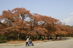 το φθινόπωρο χρωμάτισε τα φύλλα στοκ εικόνα