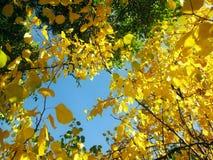το φθινόπωρο χρωμάτισε τα φύλλα Στοκ εικόνα με δικαίωμα ελεύθερης χρήσης