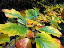 το φθινόπωρο χρωμάτισε τα &ph στοκ φωτογραφία με δικαίωμα ελεύθερης χρήσης