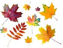 το φθινόπωρο χρωμάτισε τα &ph Στοκ εικόνες με δικαίωμα ελεύθερης χρήσης
