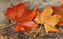 το φθινόπωρο χρωματίζει τ&alph Στοκ εικόνα με δικαίωμα ελεύθερης χρήσης
