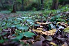 Το φθινόπωρο χρωματίζει XV Στοκ Φωτογραφίες