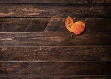 Το φθινόπωρο δύο χρωμάτισε τα φύλλα σε ένα ξύλινο υπόβαθρο με το διάστημα αντιγράφων Στοκ φωτογραφία με δικαίωμα ελεύθερης χρήσης