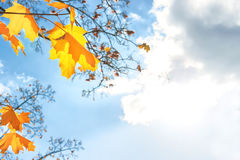 το φθινόπωρο dof αφήνει κόκκινο ρηχό Στοκ Φωτογραφίες