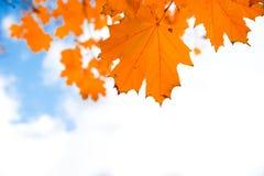 το φθινόπωρο dof αφήνει κόκκινο ρηχό Στοκ εικόνα με δικαίωμα ελεύθερης χρήσης