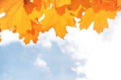 το φθινόπωρο dof αφήνει κόκκινο ρηχό Στοκ Εικόνες