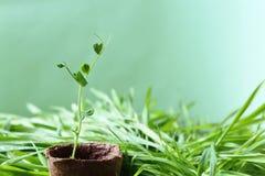 Το φιλικό προς το περιβάλλον υπόβαθρο κήπων άνοιξη είναι γαλαζωπός-πράσινο στο χρώμα Στοκ Εικόνα