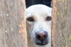 Το φιλικό σκυλί Στοκ Εικόνες