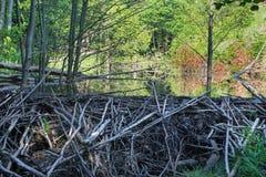 Το φράγμα καστόρων στον κολπίσκο στο δάσος λίγων Καρπάθιων Στοκ φωτογραφίες με δικαίωμα ελεύθερης χρήσης