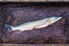 Το φρέσκο ακατέργαστο ψάρι είναι ο λούτσος που ξεφλουδίζεται και έτοιμος για τον τεμαχισμό και το μαγείρεμα σε έναν ξύλινο πίνακα Στοκ Εικόνες