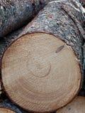Το φρέσκο κούτσουρο περικοπών, κλείνει επάνω στοκ φωτογραφία με δικαίωμα ελεύθερης χρήσης