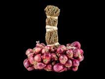 Το φρέσκο κρεμμύδι στο μαύρο bagkground με το ψαλίδισμα της πορείας στοκ φωτογραφία