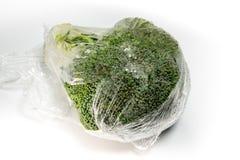 Το φρέσκο περικάλυμμα προστατεύει για το λαχανικό μπρόκολου από το πλαστικό περικάλυμμα στοκ εικόνες