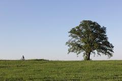 το φρέσκο πράσινο τοπίο μπορεί μέσα με τον ποδηλάτη στον ορίζοντα στοκ φωτογραφίες