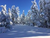 Το φρέσκο χιόνι δημιουργεί ένα όμορφο χειμερινό τοπίο Στοκ εικόνες με δικαίωμα ελεύθερης χρήσης
