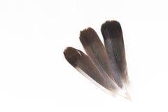 το φτερό έννοιας πουλιών τοποθέτησε το λευκό συγγραφέα Στοκ εικόνες με δικαίωμα ελεύθερης χρήσης