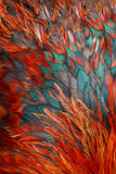 το φτερό πουλιών ομαδοπ&omicro Στοκ Φωτογραφίες