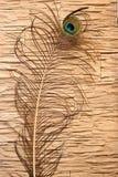 Το φτερό peacock Στοκ εικόνα με δικαίωμα ελεύθερης χρήσης