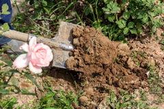 Το φτυάρι σκάβει τη γη στον κήπο λουλουδιών Στοκ Φωτογραφίες