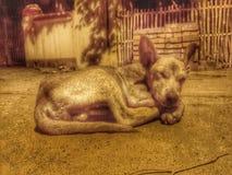 Το φτωχό σκυλί Στοκ Εικόνες