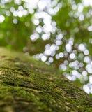 Το φυσικό πράσινο δάσος έσπασε τον κύκλο Στοκ Εικόνες