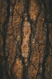 Το φυσικό σκοτεινό δέντρο και η ξύλινο σύσταση ή το υπόβαθρο επιφάνειας στο εκλεκτής ποιότητας, σκοτεινό ή τρομακτικό ύφος Στοκ φωτογραφία με δικαίωμα ελεύθερης χρήσης