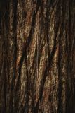 Το φυσικό σκοτεινό δέντρο και η ξύλινο σύσταση ή το υπόβαθρο επιφάνειας στο εκλεκτής ποιότητας, σκοτεινό ή τρομακτικό ύφος Στοκ Φωτογραφία