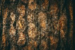 Το φυσικό σκοτεινό δέντρο και η ξύλινο σύσταση ή το υπόβαθρο επιφάνειας στο εκλεκτής ποιότητας, σκοτεινό ή τρομακτικό ύφος Στοκ Εικόνα