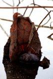 Το φυσικό τοπίο πετρών λιβελλουλών είναι όμορφο Στοκ φωτογραφία με δικαίωμα ελεύθερης χρήσης