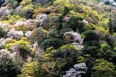 Το φυσικό υπόβαθρο με πράσινο των δέντρων Στοκ Εικόνες