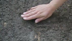Το φυστίκι σποράς χεριών της Farmer κοντά αυξάνεται απόθεμα βίντεο