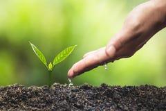 Το φυτό, δέντρο, φυτό, ζωή, γεωργία, περιβάλλον, υπόβαθρο, νέος, πράσινο, φύση, ανάπτυξη, έννοια, χέρια, αυξάνεται, φύλλο, seedli Στοκ Εικόνα