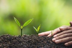 Το φυτό, δέντρο, φυτό, ζωή, γεωργία, περιβάλλον, υπόβαθρο, νέος, πράσινο, φύση, ανάπτυξη, έννοια, χέρια, αυξάνεται, φύλλο, seedli στοκ φωτογραφίες με δικαίωμα ελεύθερης χρήσης