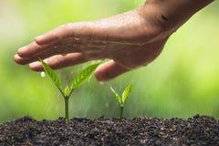 Το φυτό, δέντρο, φυτό, ζωή, γεωργία, περιβάλλον, υπόβαθρο, νέος, πράσινο, φύση, ανάπτυξη, έννοια, χέρια, αυξάνεται, φύλλο, seedli Στοκ φωτογραφία με δικαίωμα ελεύθερης χρήσης