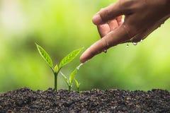 Το φυτό, δέντρο, φυτό, ζωή, γεωργία, περιβάλλον, υπόβαθρο, νέος, πράσινο, φύση, ανάπτυξη, έννοια, χέρια, αυξάνεται, φύλλο, seedli Στοκ εικόνα με δικαίωμα ελεύθερης χρήσης