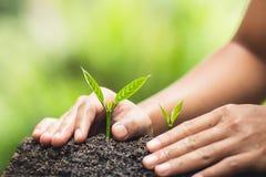 Το φυτό, δέντρο, φυτό, ζωή, γεωργία, περιβάλλον, υπόβαθρο, νέος, πράσινο, φύση, ανάπτυξη, έννοια, χέρια, αυξάνεται, φύλλο, seedli Στοκ Φωτογραφία