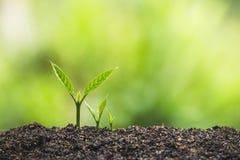 Το φυτό, δέντρο, φυτό, ζωή, γεωργία, περιβάλλον, υπόβαθρο, νέος, πράσινο, φύση, ανάπτυξη, έννοια, χέρια, αυξάνεται, φύλλο, seedli στοκ φωτογραφίες