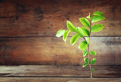 Το φυτό αυξάνεται στην παλαιά ξύλινη ρωγμή και συμβολίζει την ανανέωση και τη φρεσκάδα Στοκ εικόνα με δικαίωμα ελεύθερης χρήσης